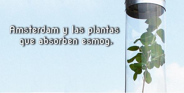 plantasesmog-con